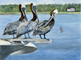 Oil on linen wildlife painting of three pelicans perched on bow of boat by Lee Mims.