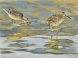 Oil on canvas wildlife painting of sand pipers on the beach by Lee Mims.